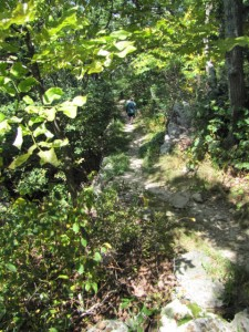 switchbacks on a trail with leafy trees above