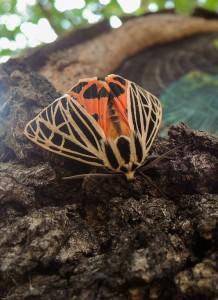 moth-970784_1280
