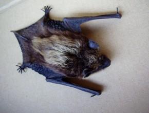 bat-655230_1280