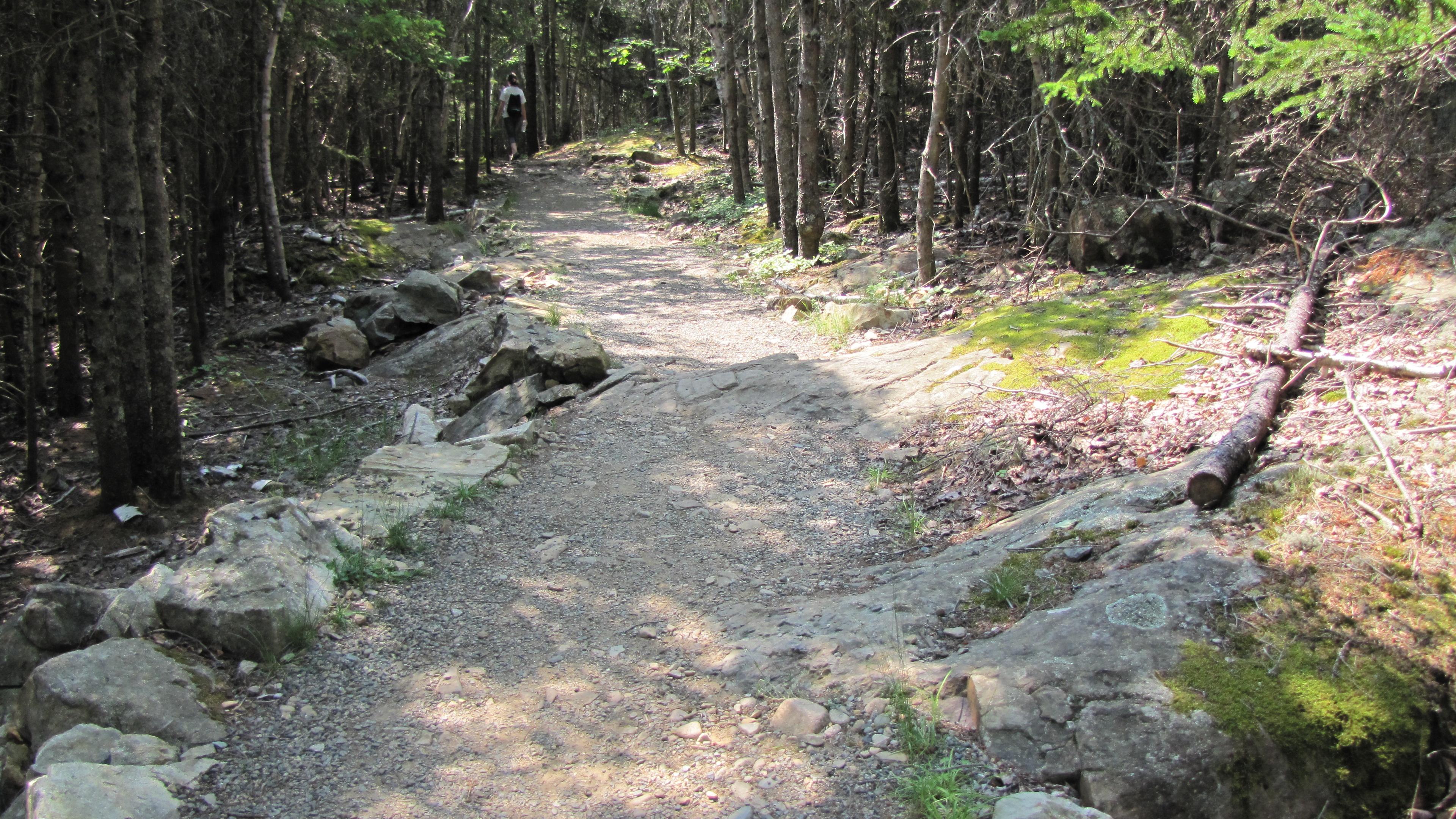 trail @ Acadia National Park, Maine