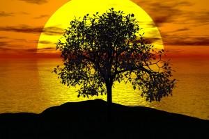 tree-1076831_1280