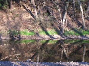 creek with bright green foilage on far bank, trees reflected in water