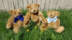 teddy-1335169_1920